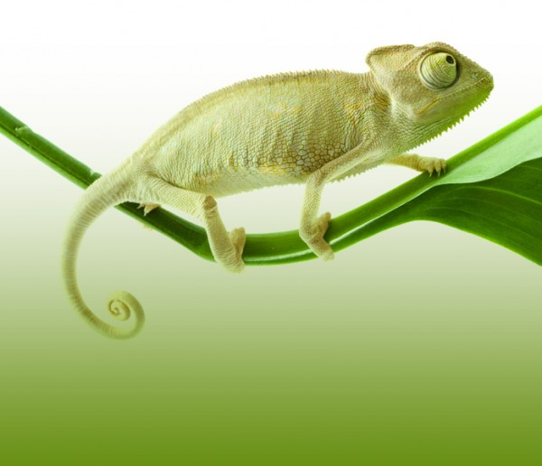 Are you a chameleon or an SEO?
